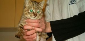 badania kotów